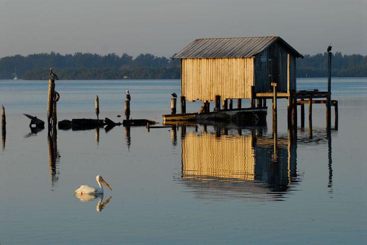 Florida and fish on pinterest for Florida gulf coast fishing