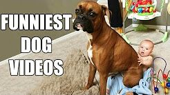 funny dogs - YouTube