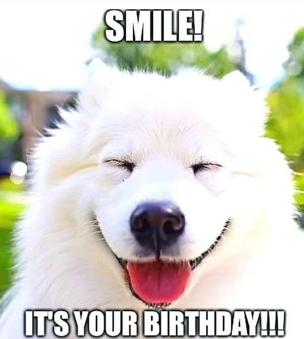 Birthday Is One Of The Most Awaited Moments For Everyone It Is Mostly The Perfect Time To Greet And Ma Happy Birthday Dog Meme Happy Birthday Dog Samoyed Dogs