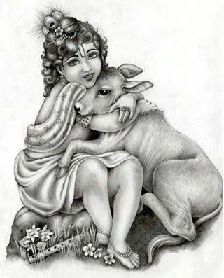 Alive and happy cowsies are greatly loved by Gopal Krishna