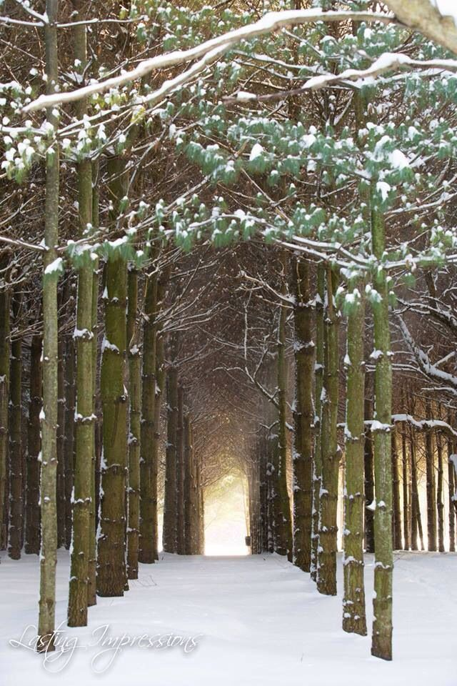 "Winter photography ""the path less travelled"" Lasting Impressions by Helen Mels"