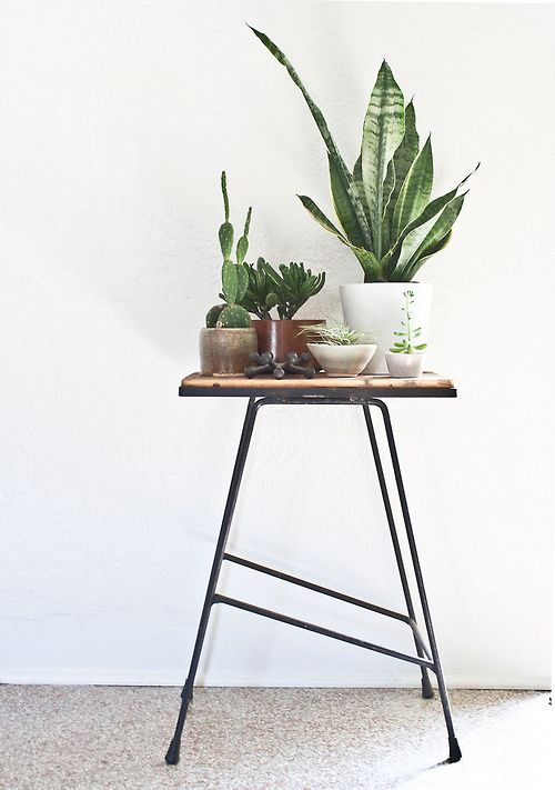 Plants + Vintage Stand (by Kimberly Rhodes Roberts)