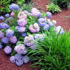 Best Low Maintenance Shrubs or Flowers for Your Yard - InfoBarrel for back corner of back deck that never gets sun
