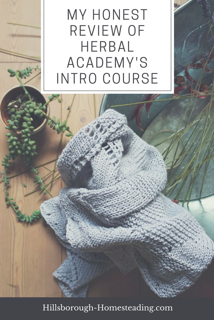 Thinking about an online herbalism course to increase your herbal education? Read this post before you buy! You'll find a detailed course outline, pros and cons of Herbal Academy's Intro Course, and tips and tricks to know BEFORE you start. Don't wait! Click now! | Hillsborough Homesteading