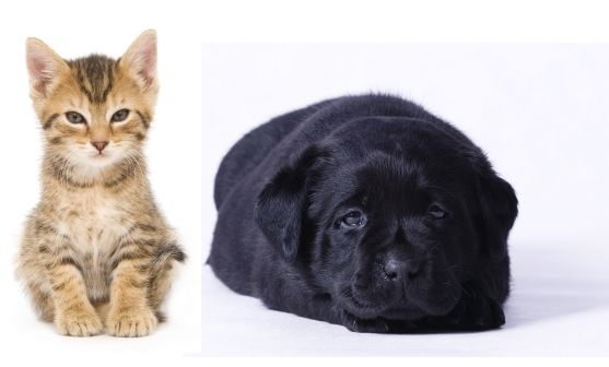 Natural Flea Control For Dogs & Cats