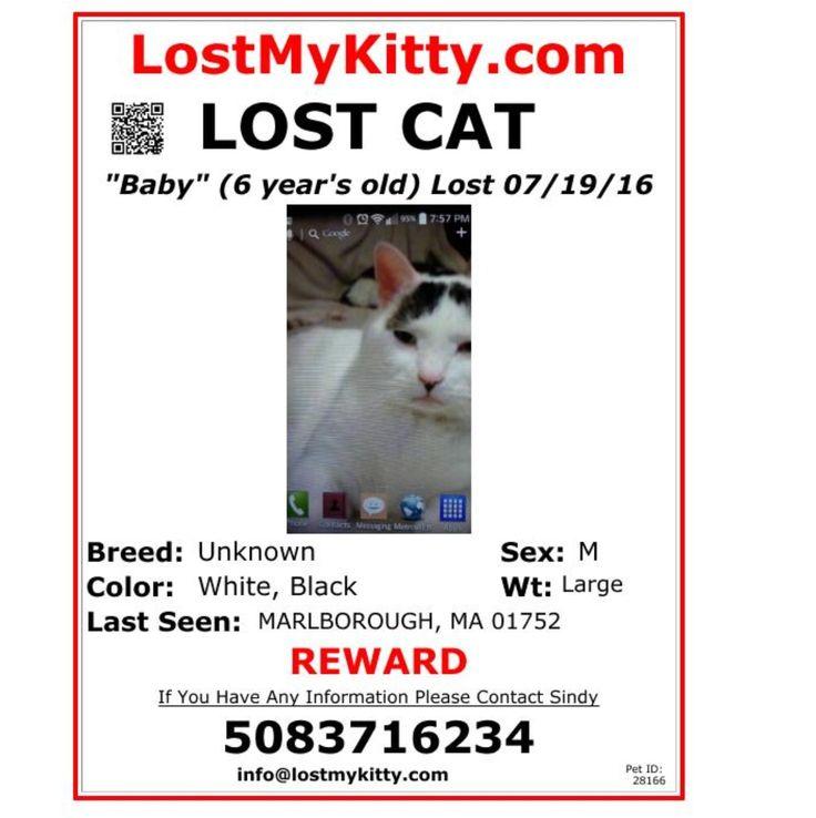 Lost Male Cat Named Baby Marlborough Ma Lost Cat Pet Id Cat Names
