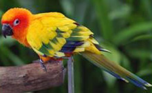 Choosing The Right Wood For Bird Toys