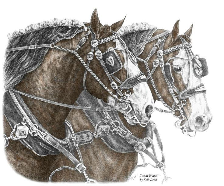 colorful pictures of draught horses draft horse print color tinted drawing team work