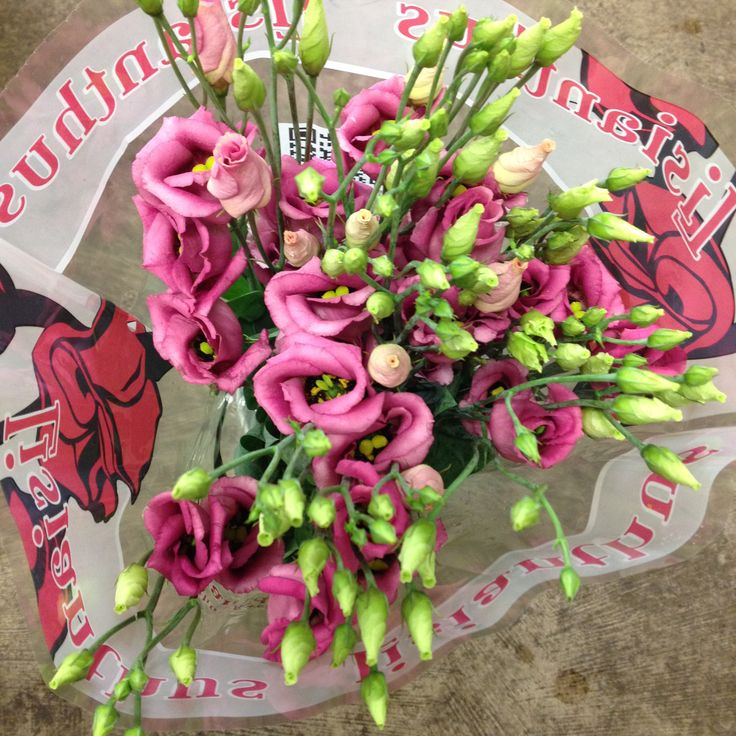 Lisianthus 'Pink Piccolo' sold in bunches of 10 stems from The Flowermonger.