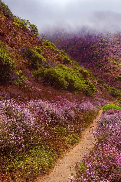 Heather hillside in the fog
