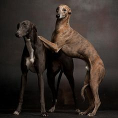 paul croes dogs - Google Search