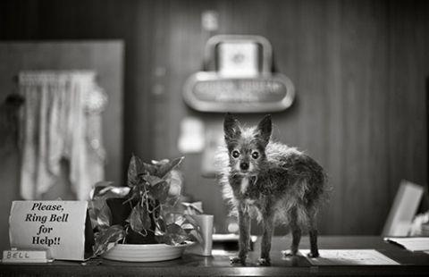 Sweet portraits of elderly dogs