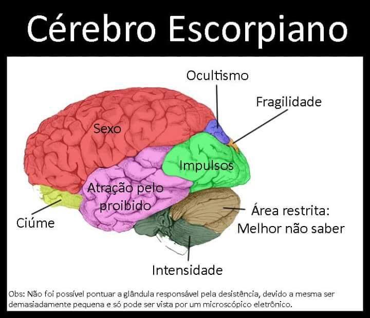 O Cérebro Escorpiano