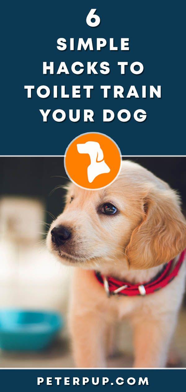 6 Simple Easy Hacks To Puppy Potty Training Dog Training