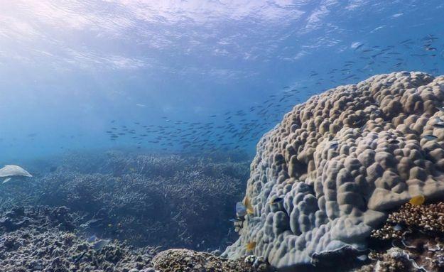 A grande barreira de #corais está disponível no Google Street View: http://abr.io/5CYC
