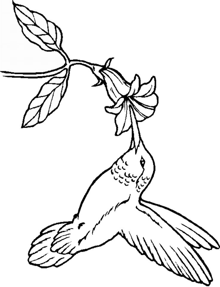 humming bird coloring pages - Bird Coloring Book