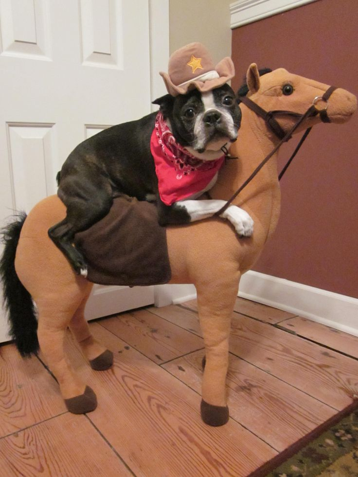 pet costume boston terrier halloween cowboy bandana and hat - Halloween Costumes In Boston