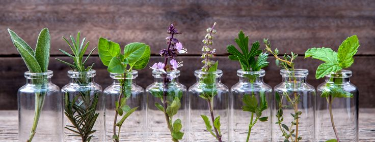 """It seems we are introduced to a new and effective """"miracle"""" plant on a weekly basis. But what if this one is different from others, what if this one truly works? When I first dis…"""