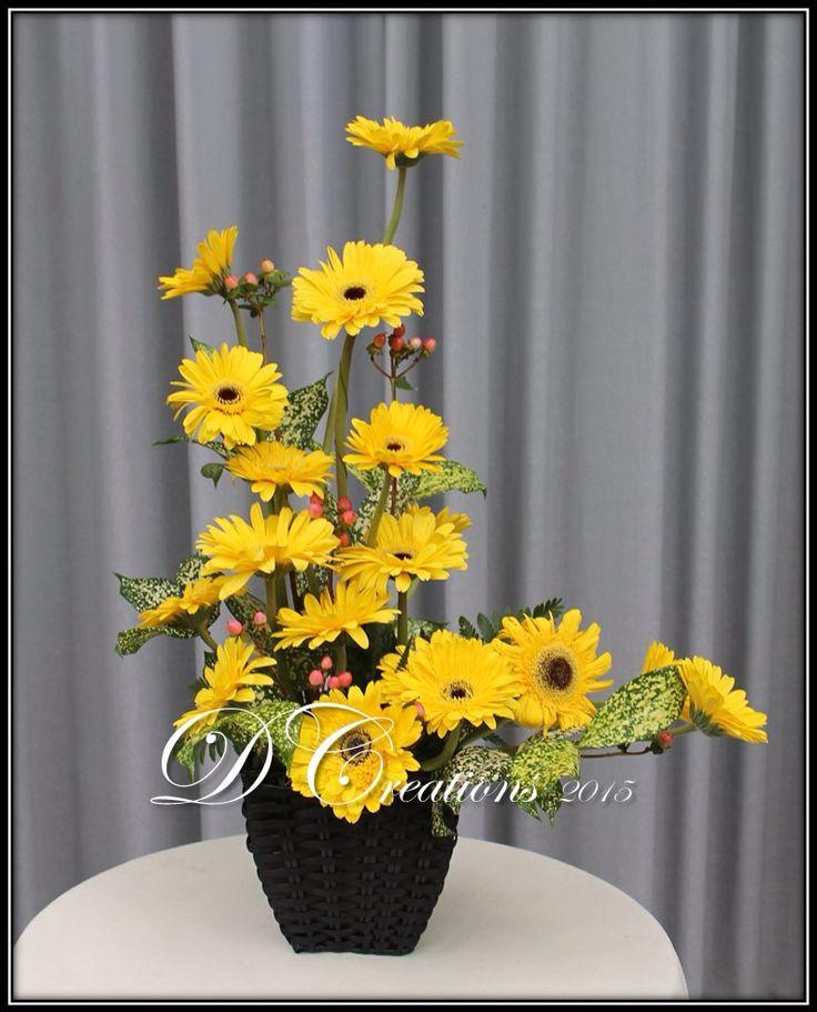 Yellow geberas