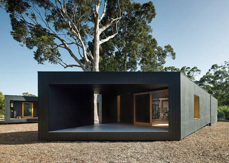 Karri Loop House by MORQ folds around three indigenous Australian trees