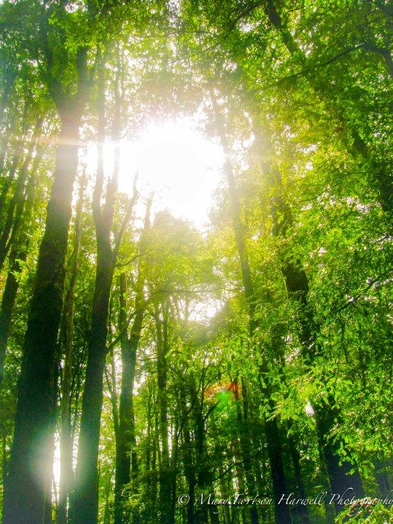 The Otway Rainforest near the Great Ocean Road!