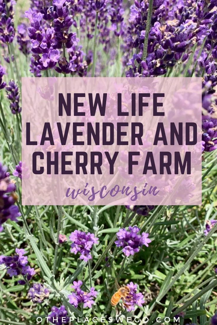 9 Reasons To Visit New Life Lavender And Cherry Farm In Baraboo O The Places We Go Cherry Farm Baraboo Farm
