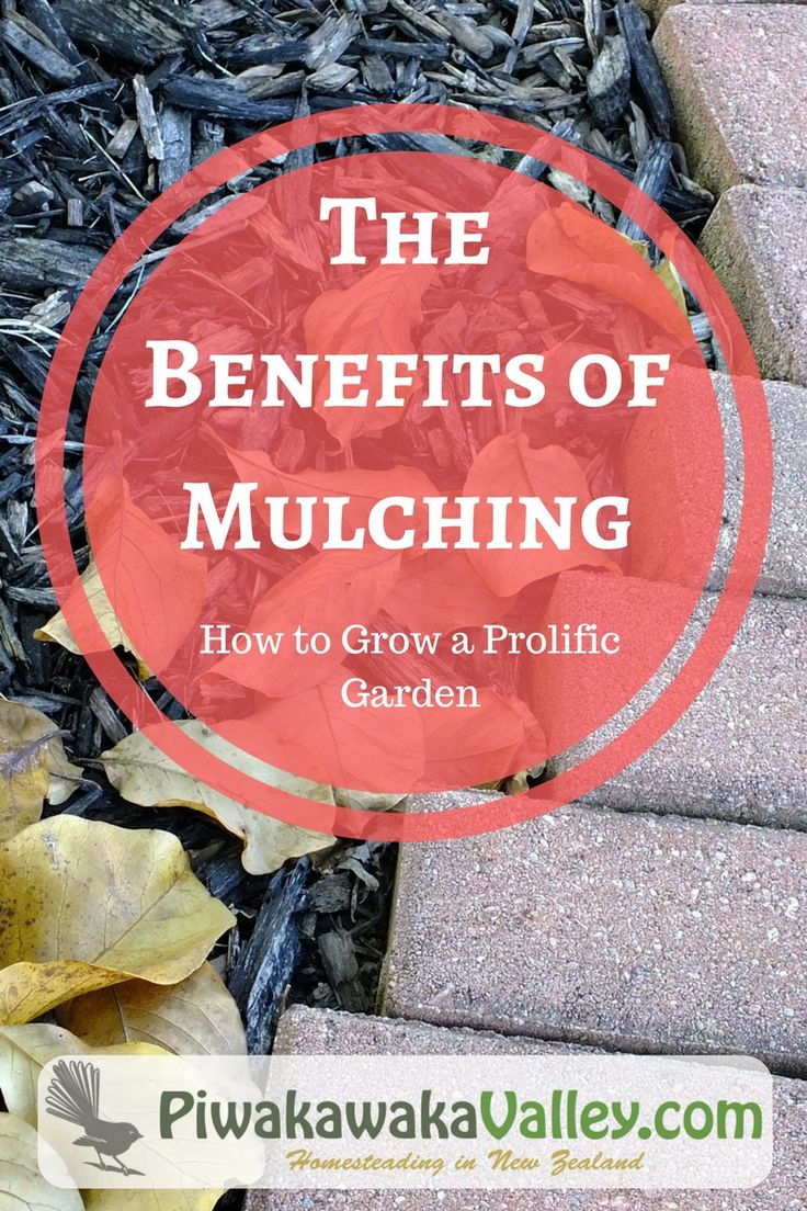 Create a self sufficient vegetable patch. Benefits of Mulching - How to Grow a Prolific Garden.