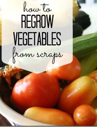 How To Regrow Vegetables From Scraps via Tipsaholic.com #garden #planting