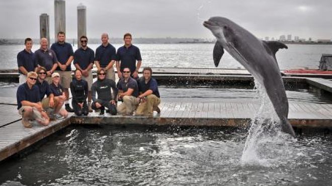 The Dolphin Trainer Who Loved Dolphins Too Much Choppers - marine mammal trainer sample resume