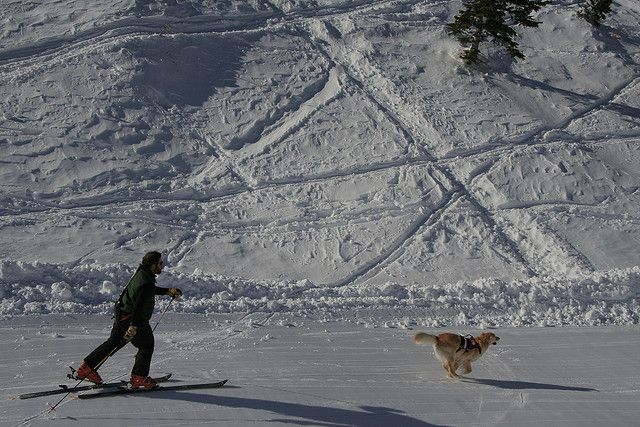 On Tuesday February 5th Alpine Meadows hosted a full day of search and rescue dog training in conjunction with the Placer County Sherriff Search and Rescue, and the Placer County Sheriff's Search and Rescue Tahoe Dog Team. It was a real carnival for  Dog Training DVDS  http://www.trainingdogsvideos.com