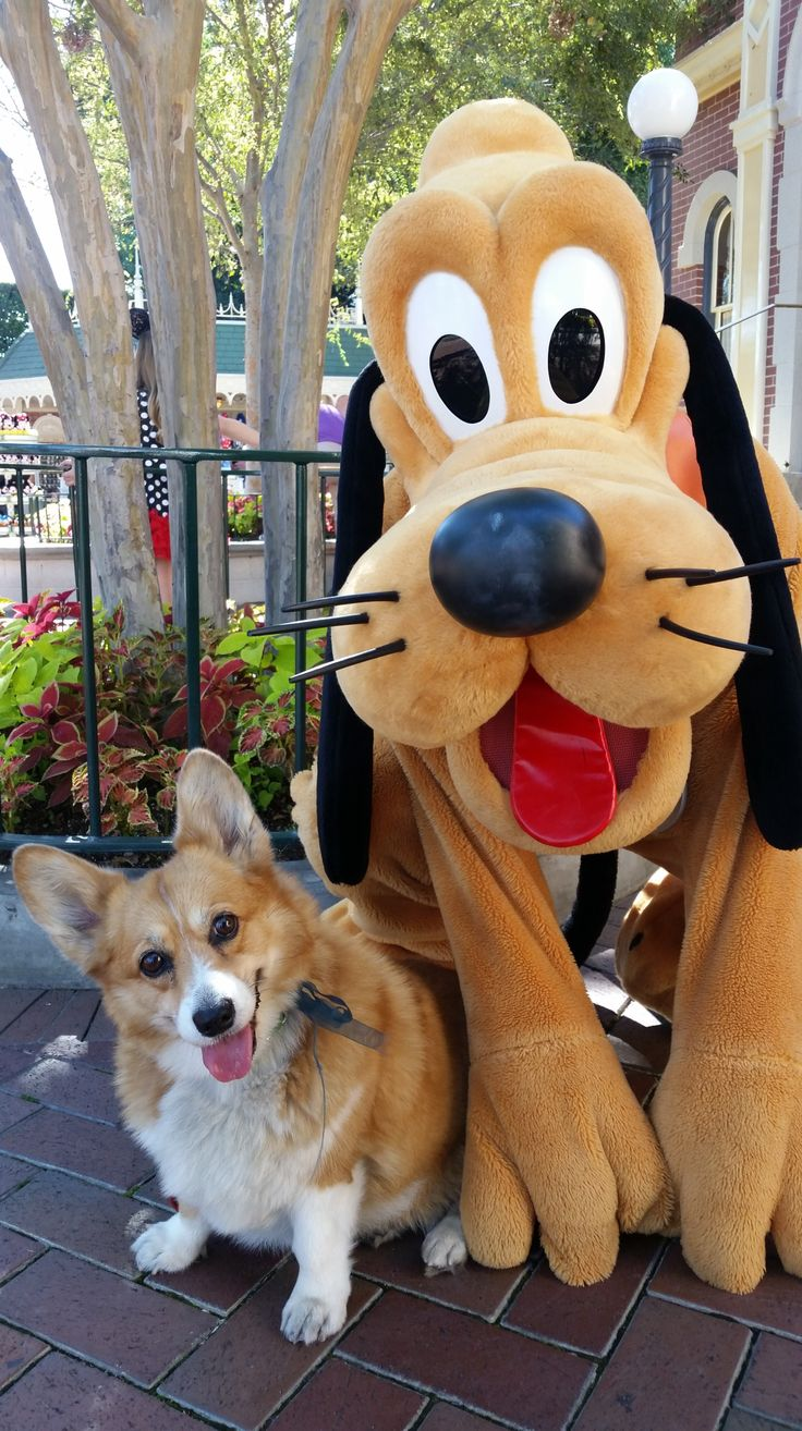 Corgis For Sale >> You can't handle these adorable photos of a corgi posing with Disney characters   Disney, Trips ...