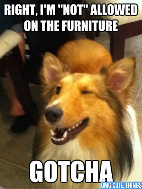 45710b3d0420c2cace6f28bde2e2c5a7 wink wink funny dogs 20 best funny memes images on pinterest animals, funny stuff and,Memes Omg