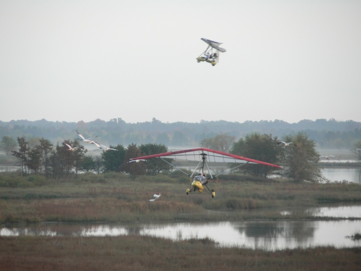 Teaching endangered whooping cranes to fly in Neceda National Wildlife Refuge, WI