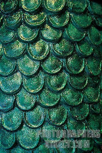 Fish Scales Close Up | Stock Photography image of a closeup of fish scales in the religious ...