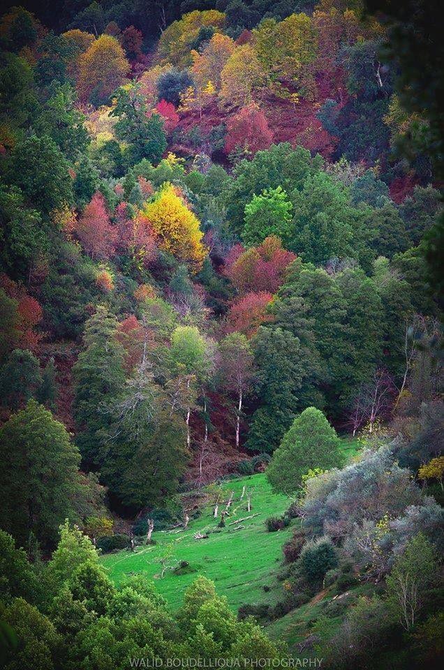 إليك أجمل و أروع 18 صورة لفصل الخريف في الجزائر في بلادي Scenery Places To Travel Solo Travel