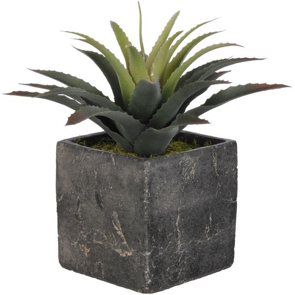 Artificial Star Succulent Desk Top Plant in Cube Pot Reviews ($36) ❤ liked on Polyvore featuring home, home decor, floral decor, fake indoor plants, succulent pots, artificial indoor plants and star home decor
