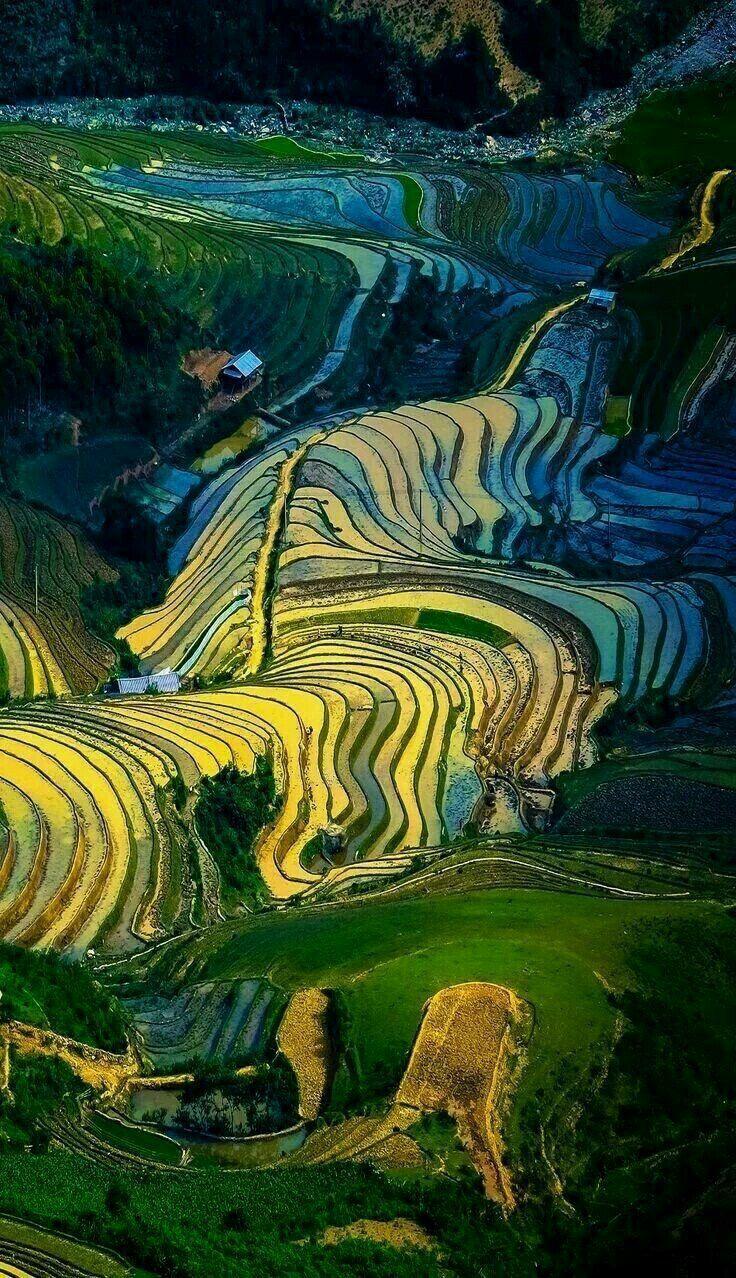 Terraced Rice Fields of Cang Chai, YenBai, Vietnam