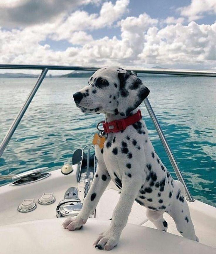 Gefällt mir 4,088 Mal, 32 Kommentare – Colors_fever (@colors_fever) auf Instagram: …  – dogs – #auf #Colorsfever #dogs #Gefällt #INSTAGRAM
