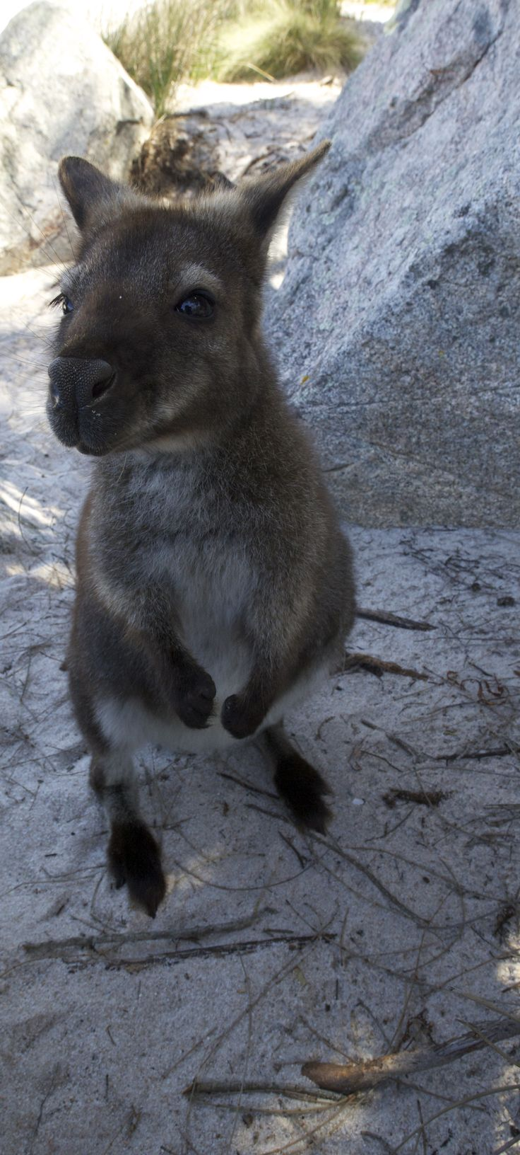 I was able to get up very close to this little fella. www.australianphotos.com.au