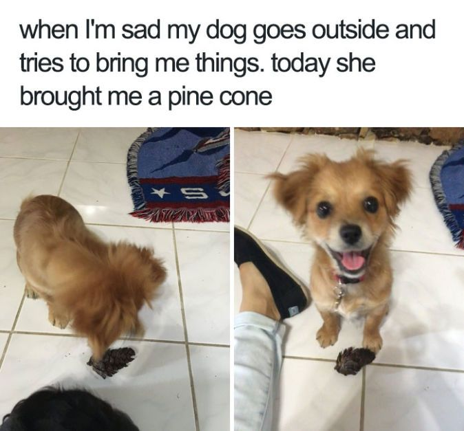 best 25 happy dog meme ideas on pinterest laughing dog