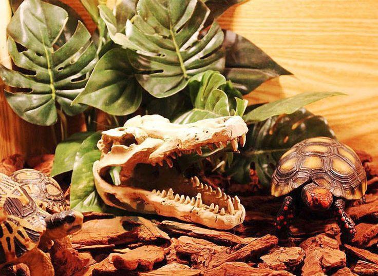 Snake Tank Decor Reptile Skull Accessory Pet Lizard Turtle Aquarium Decoration