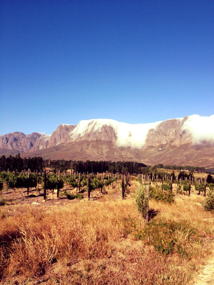 #Hotentot #Mountains from #Lalapanzi #Lodge on #Wederville #Estate #Western #Cape #South #Africa