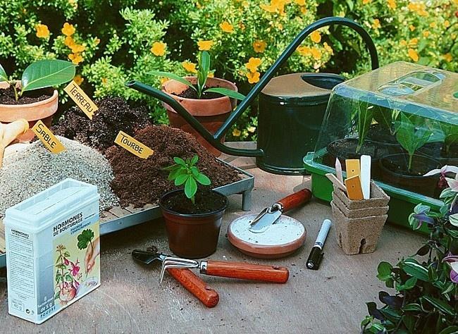 Bouturage de vivace, plante et arbuste  Le printemps est l'une des grandes périodes de bouturage. Profitez de ce moyen facile et économique pour obtenir de nombreuses plantes contre simplement un peu de temps.