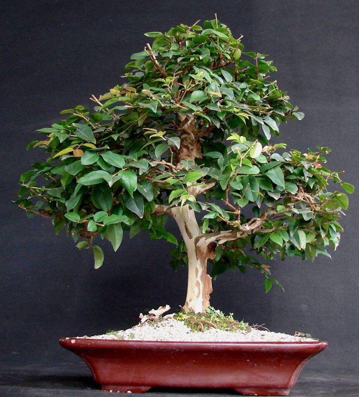 Indoor Plants Images