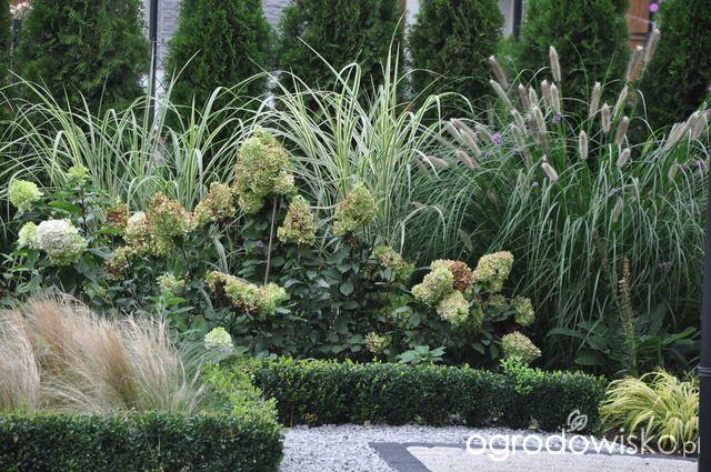 Lawendowy zawrót głowy - strona 1378 - Forum ogrodnicze - Ogrodowisko