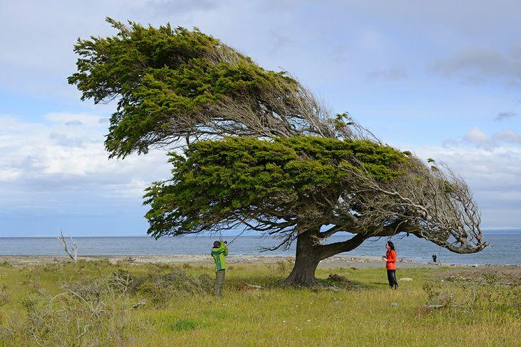 La comuna de Río Verde se encuentra ubicado a 87 km al norte de Punta Arenas a orillas del Seno Skyring, su capital del mismo nombre, es un poblado ganadero rodeado de incomparable belleza. http://bit.ly/1l1Cpcr