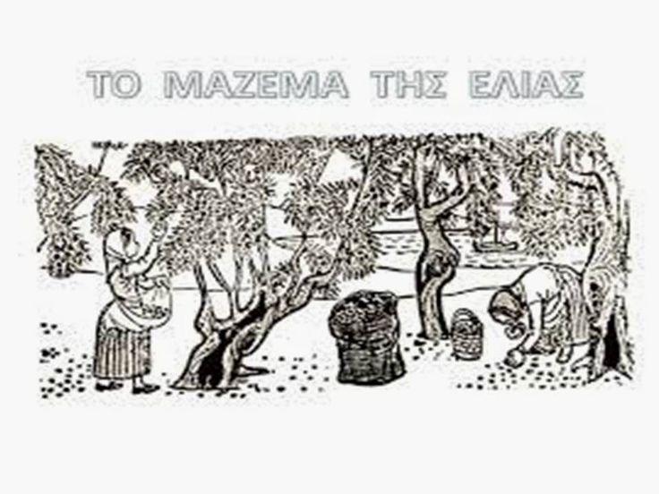 sofiaadamoubooks: Το  μάζεμα  της  ελιάς