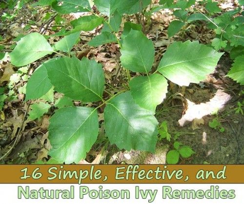 If you're an avid camper or an outdoor junkie, chances are you've had a few bouts with some nasty poison ivy—it's just a fact of life. It can be an unexpected setback, but a bit of poison ivy rash can be taken care of in a multitude of ways. Whether you have the many ingredients at home available, or you are caught with a rash out in the wild, this list of soothing measures can serve you and relieve pain, itchiness, blisters, and inflammation. Be it on the trail or in your backyard, try out…