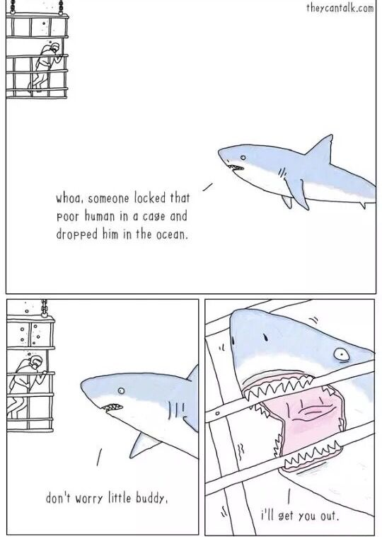 Sharks are caring! Like & Repin. Noelito Flow. Noel songs. follow my links http://www.instagram.com/noelitoflow