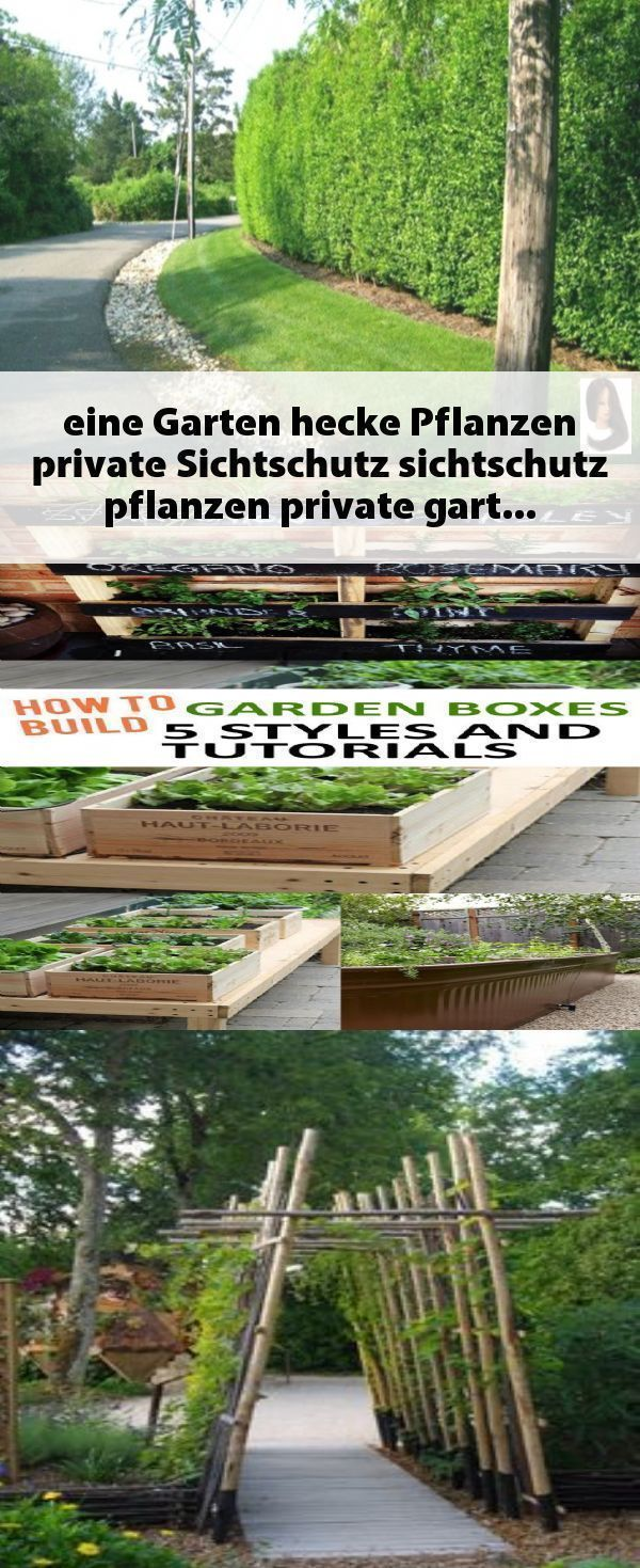 Garten Hecke Garten Hecke Garten Hecke Garten Hecke Garten Eine Garten Hecke Pflanzen Private S In 2020 Shade Loving Perennials Ground Cover Plants Garden Types